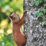 Camping Lac De Savenay : Squirrel 4473622 1920