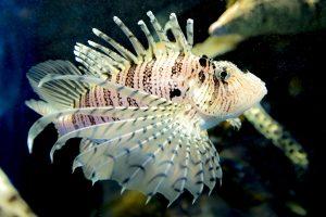 Lac de Savenay Campsite: Aquarium - Le Croisic Oceanarium