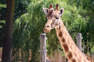 Lac de Savenay Campsite: Girafe - Planète sauvage