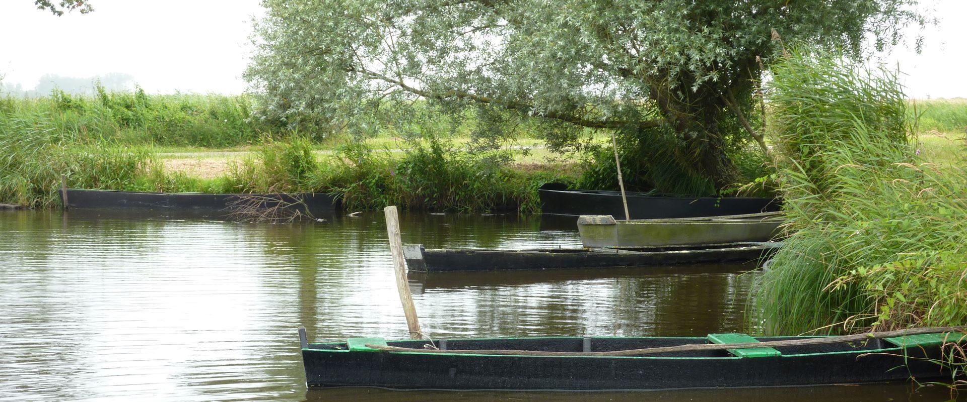 Camping Lac De Savenay : P1010789bis